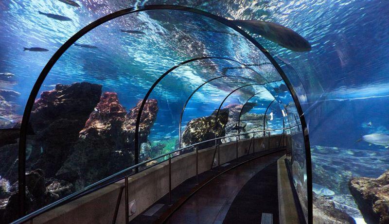 Európa legnagyobb akváriuma is itt van
