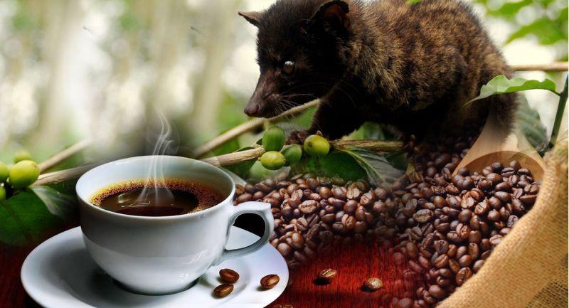 """A cibetmacska """"alkotja meg"""" ezt a drága kávét"""