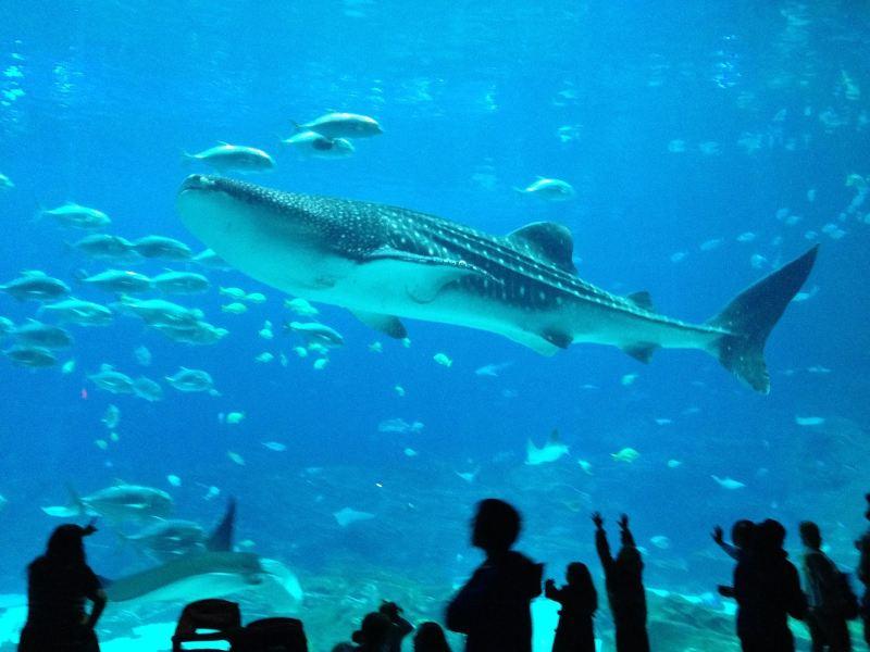 A világ egyik legjobb akváriumának tartják