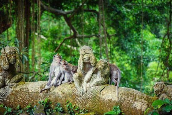 Vigyázzunk az értékeinkre, mert a majmok szeretnek lopkodni! :)