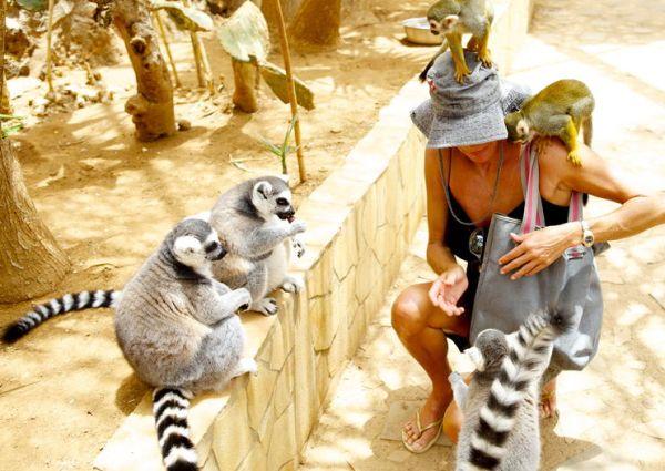A Monkey Zoo Parkban nemcsak majmokat láthatunk