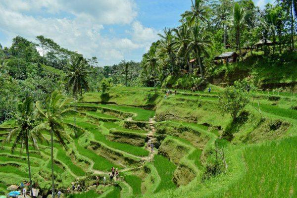 Bali élménybeszámoló Gergőtől