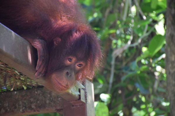 Malajzia-Borneó-Szingapúr élménybeszámoló