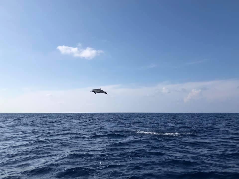 Egy delfin a levegőben :)