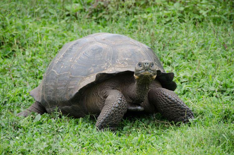 A Galapagos-szigeteken nagyon védik az állatvilágot