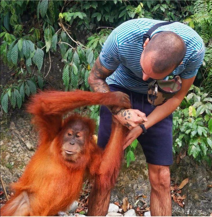 Amikor egy orángután barátkozni kezd :)