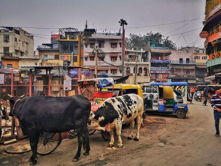 Egy utcakép Delhiben