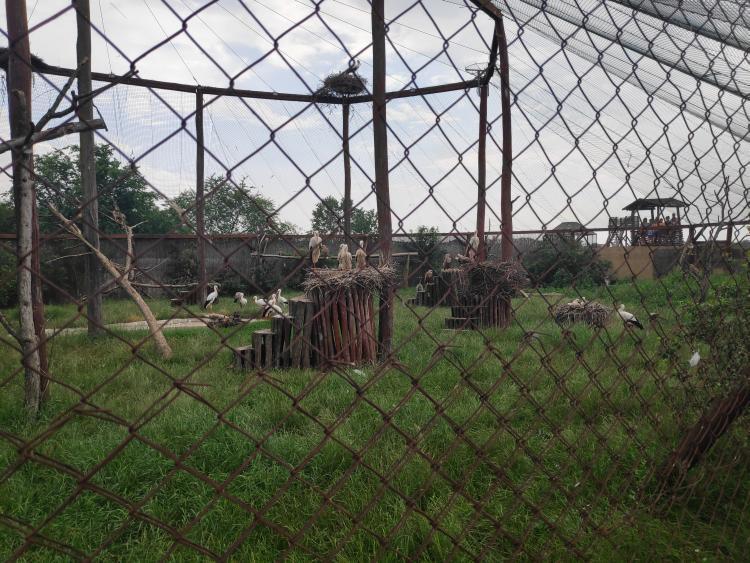 A nagy röpdében gólyák, sasok pihengetnek