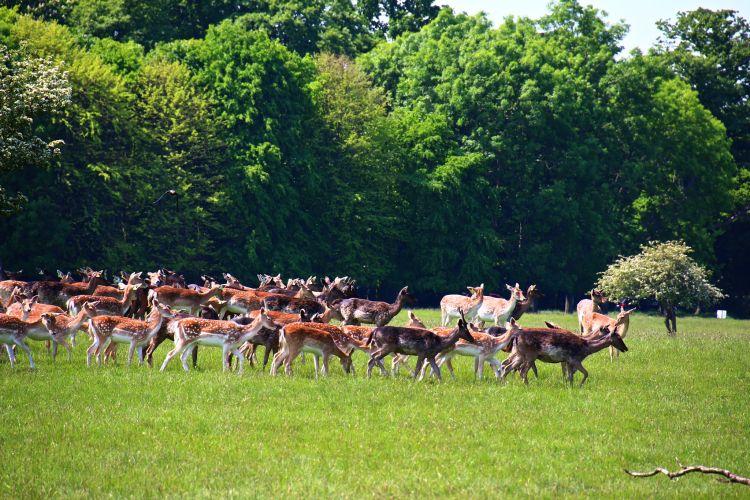 A parkban vadon élő állatokat is láthatunk