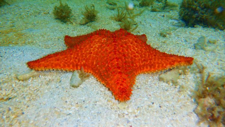 Mindenféle állat látható a víz alatt