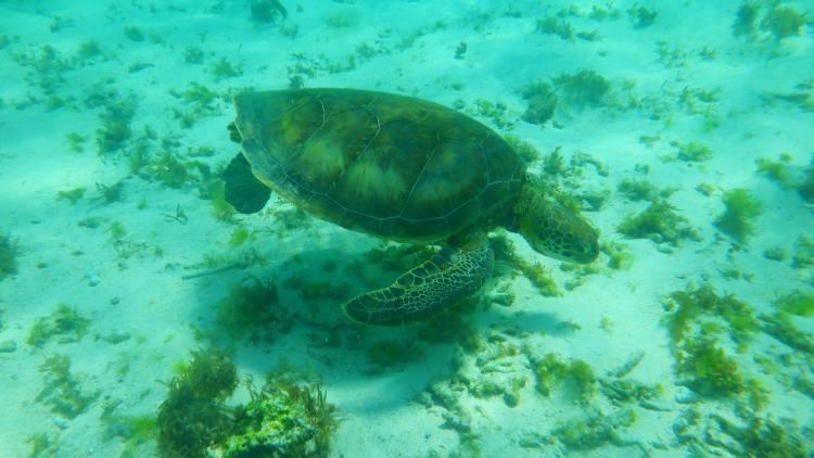 A teknősökkel szinte mindig találkozhatunk