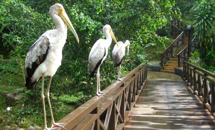 Az itt lévő madarak nagy része nem szívbajos :)