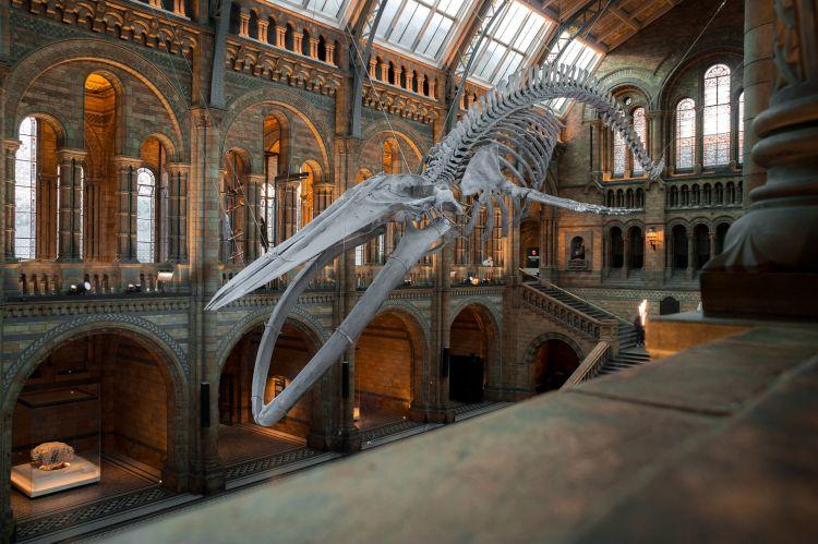 A kék bálna csontváza biztosan lenyűgözi a gyerekeket
