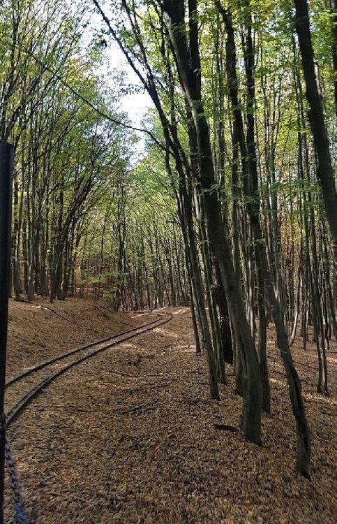Bármelyik vonalon utazva az erdő sűrűjében halad a kisvonat