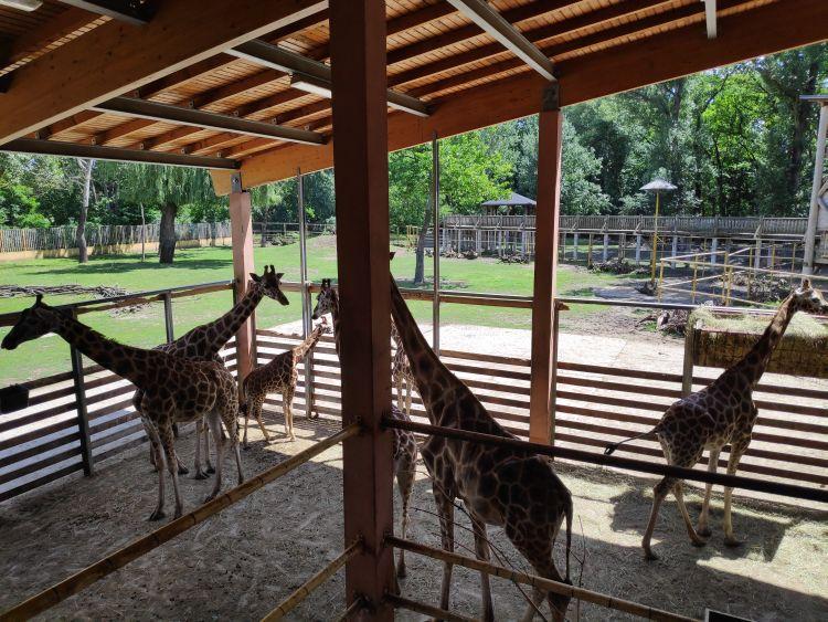 A Nyíregyházi Állatkert Európa egyik legjobbja