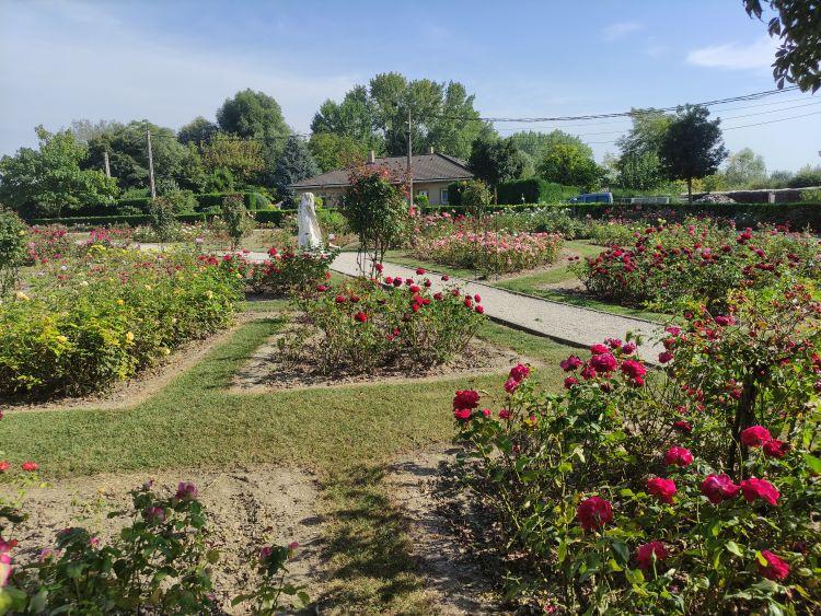 Érdemes a rózsák közé leülni és élvezni a látványt